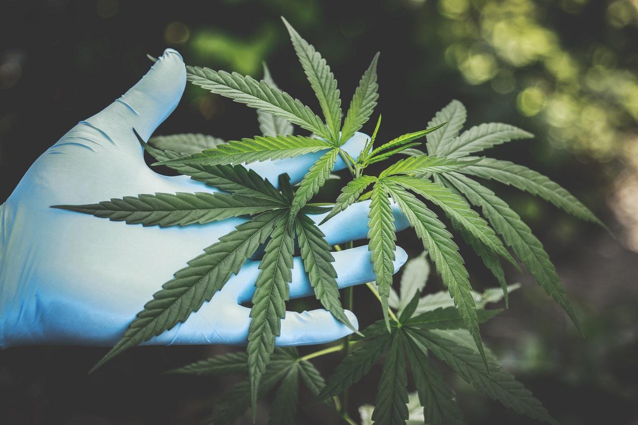 CBD nije isti što i marihuana